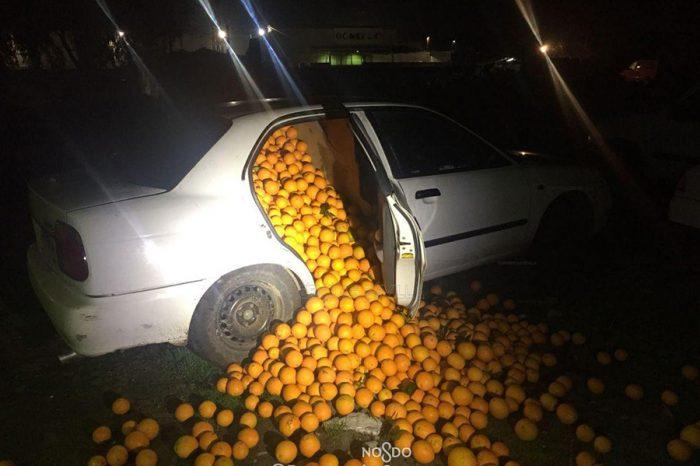載著上千顆柳橙還想跑!很缺維他命C嗎?