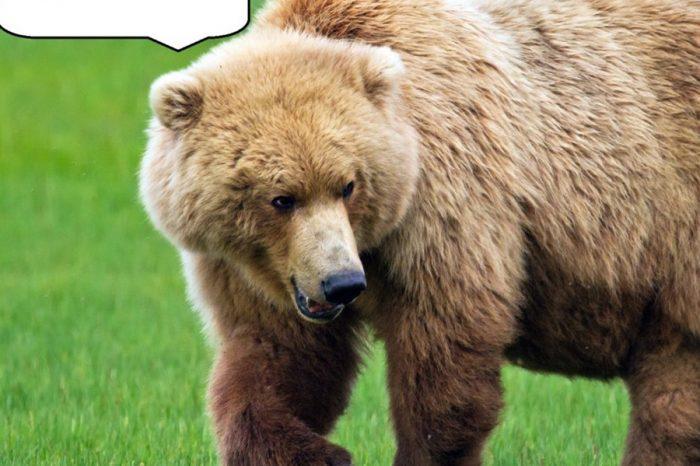 偷車奇案 灰熊偷車反鎖車內搞破壞