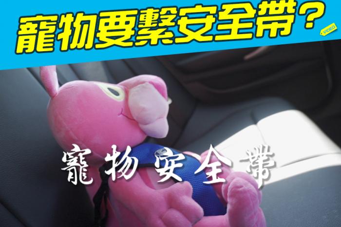 《拒吃三寶飯》寵物也要繫安全帶?